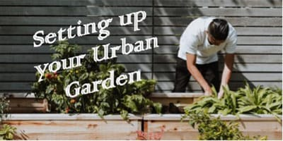 setting up your urban garden
